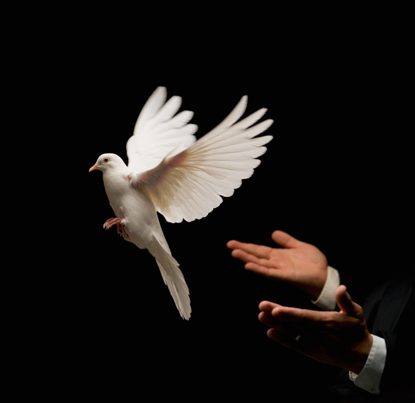 White-Dove-Release-Freedom-Peace
